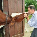 Статья за изнасилование крупного рогатого скота