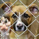 Жестокое обращение с животными статья 245 УК